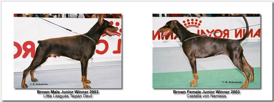brown_junior_2003